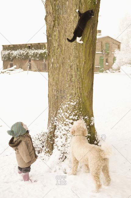 Cat climbing on tree - Offset
