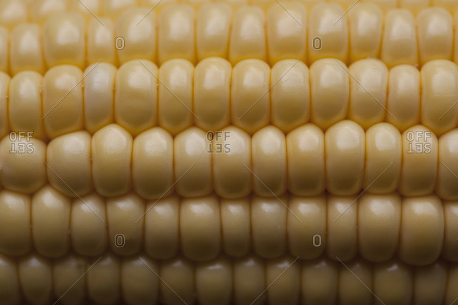 Close-up of corn on the cob