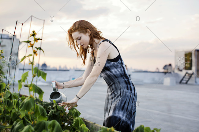 Urban gardener watering plants on rooftop