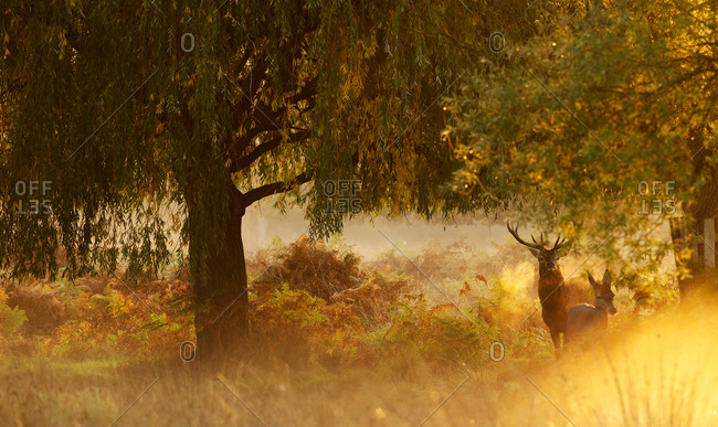 Deer standing under a tree at sunrise