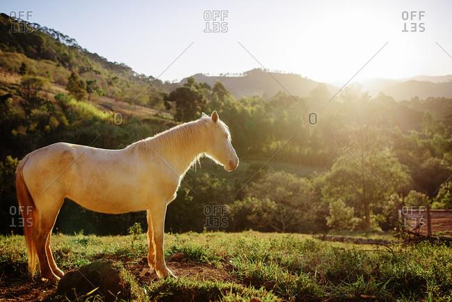 Horse standing in a field in Goncalves, Brazil