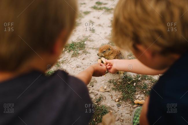 Children giving peanut to a marmot