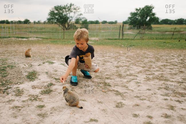 Boy feeding marmot - Offset Collection