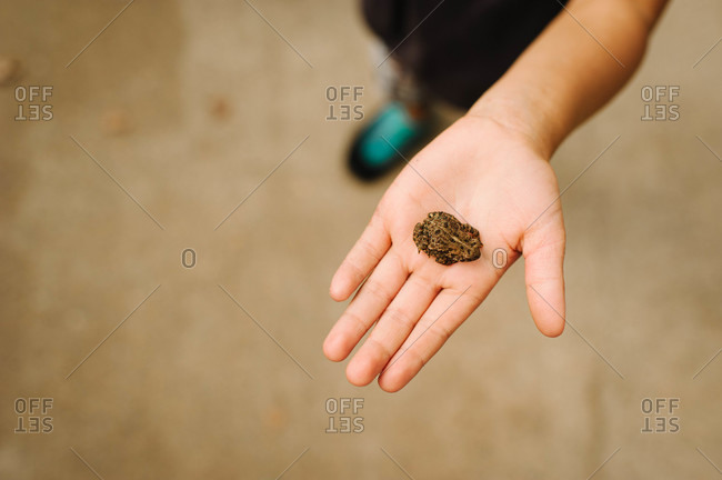Child holding a tiny frog in his hand