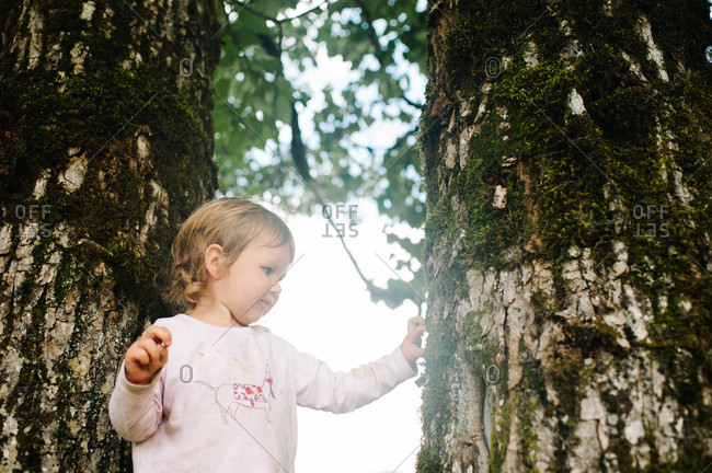 Little girl touching the trunk of a tree
