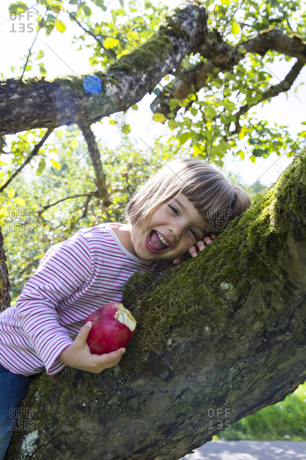 Portrait of laughing little girl sitting on an apple tree with bitten apple