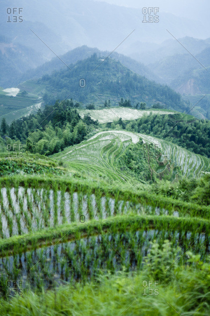 Flooded rice terraces in Longsheng, China