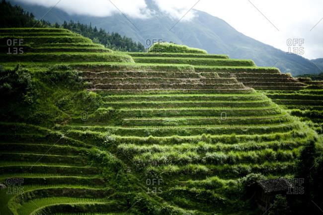 Landscape of rice terraces Longsheng, China