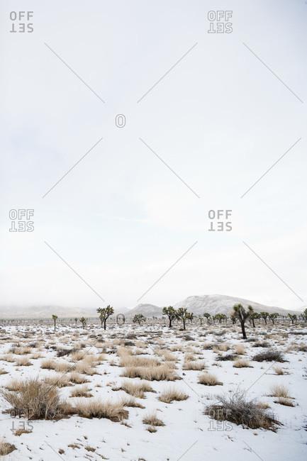 Winter in Joshua Tree National Park, California, USA
