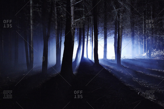 Eerie woods and the English countryside at night