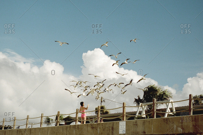 Young girl looking at seagulls on a beach