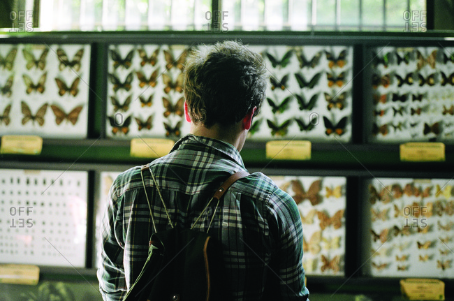 Man looking at butterfly specimens in insect displays