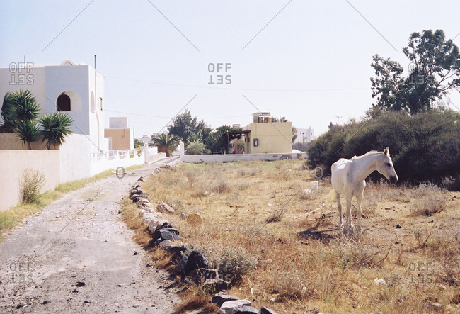 White horse standing by a dirt road in a Greek town