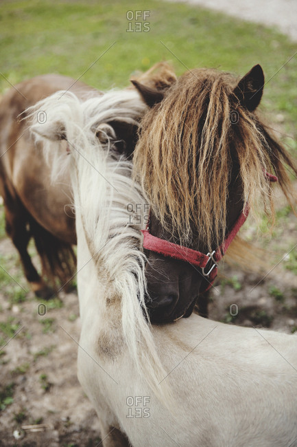 Two horse close together