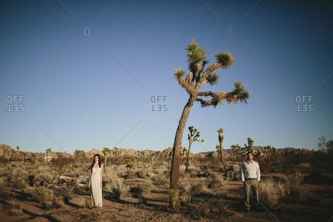 Newlywed couple posing by a Joshua tree