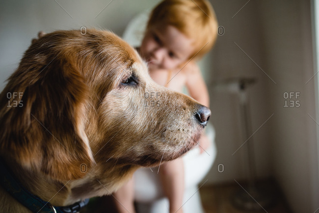 Watchful dog with a redhead girl