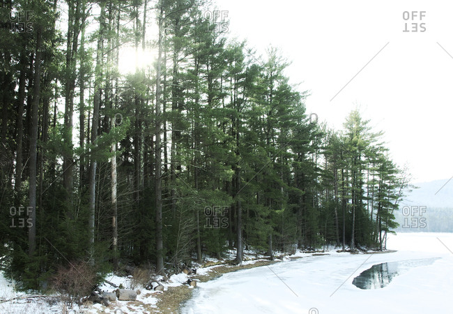 Wintertime in a forest in Willow, New York
