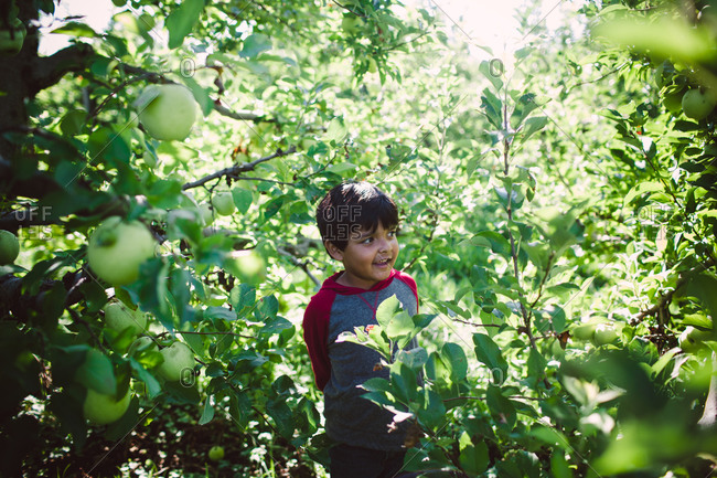 Boy standing among apple trees