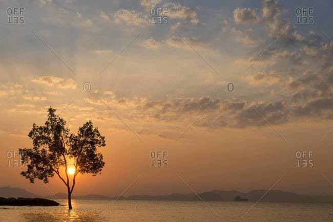 A tree in the water is silhouetted by the sunset in Krabi, Thailand