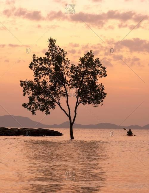 A tree and kayaker in the water are silhouetted by the sunset in Krabi, Thailand