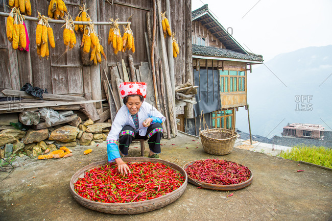 Zhuang woman drying red chili peppers in open air, Guangxi, China