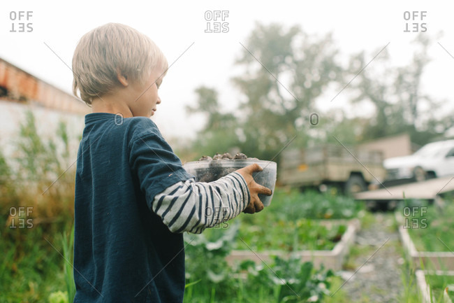Side view of boy standing with tuber roots in the garden