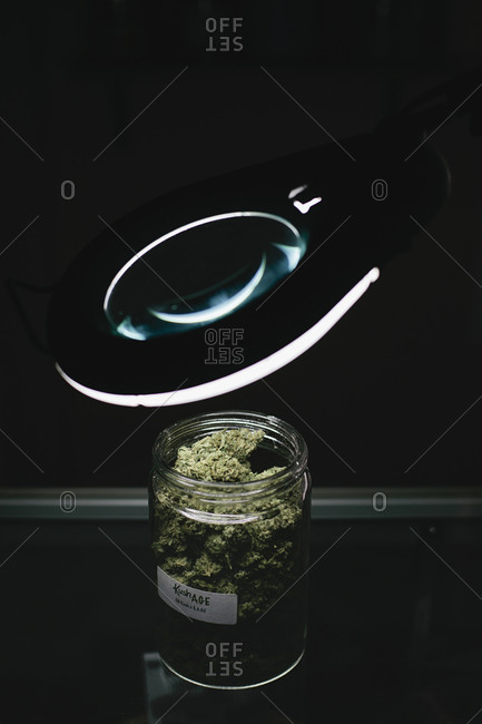 Jar of marijuana buds under a magnifying glass