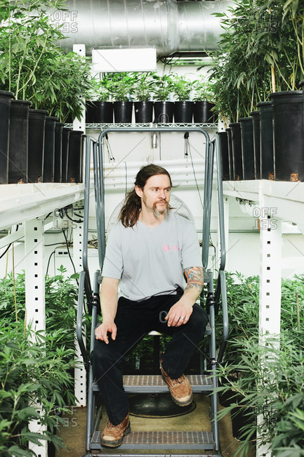 Denver, Colorado, USA - April 16, 2013: Elliott Klug, the owner of Pink House Blooms, sits in his grow house