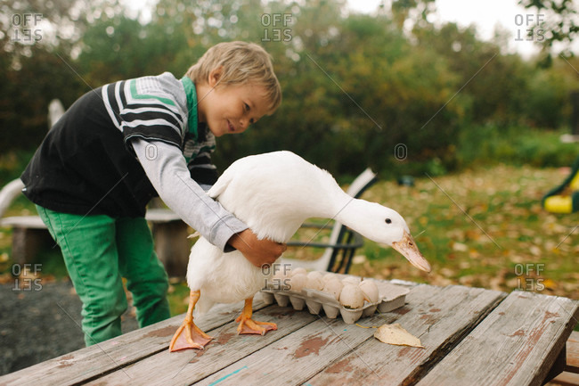 Young boy holding back a goose on a table