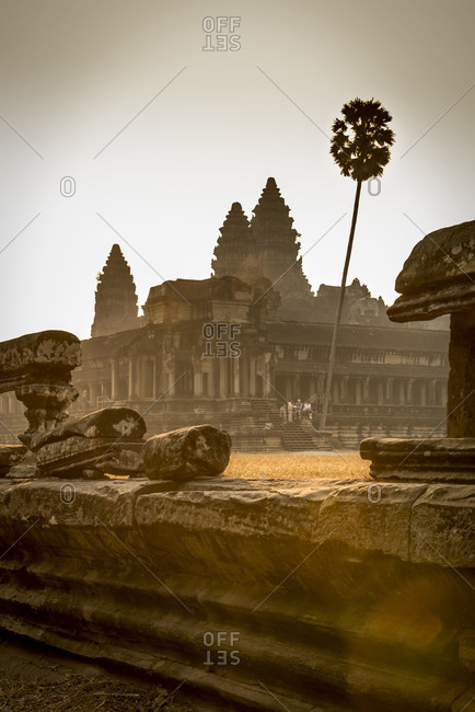 A lone, tall palm tree in the temple complex of Angkor Wat