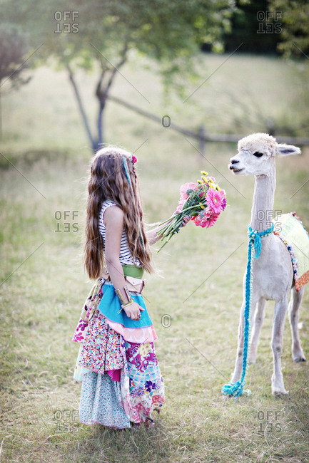 Girl showing a flower bouquet to a llama