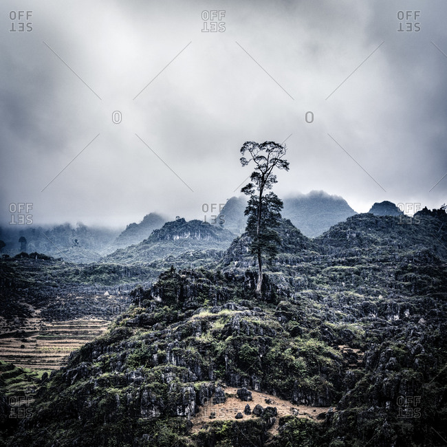 A tree rises against a misty background