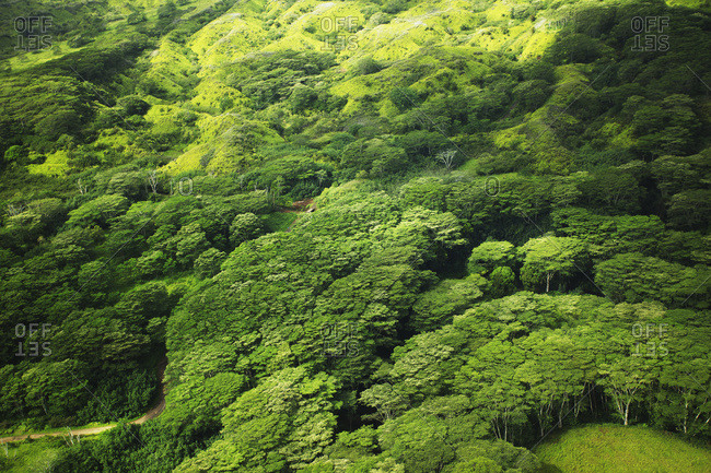 Lush tree tops in a forest, Hawaii