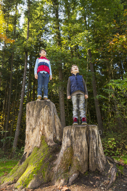 Two brothers standing on tree stumps in a redwood forest