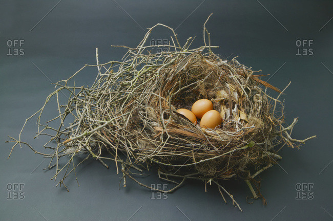 Three eggs in a bird\'s nest