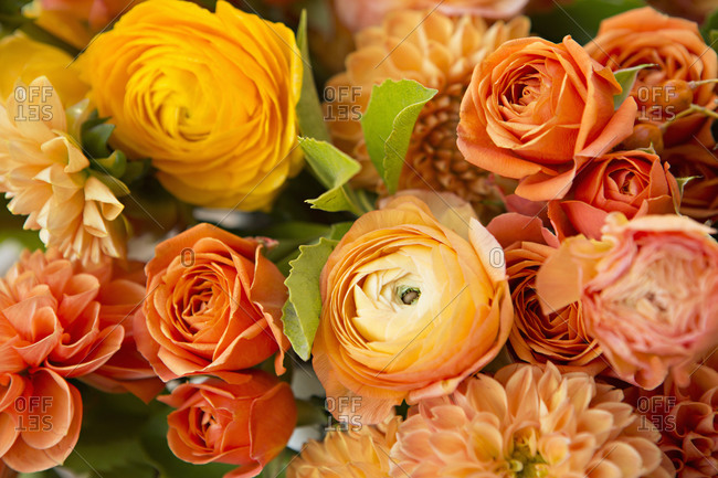 Close up of various kinds of orange flowers
