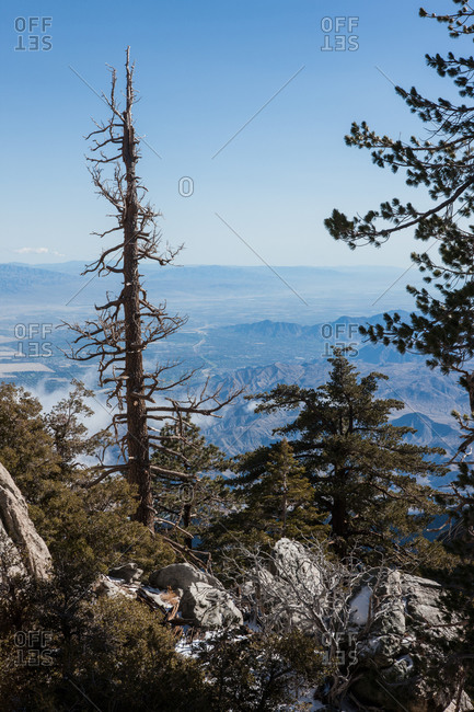 View of a bare tree at the San Jacinto mountains in California, USA
