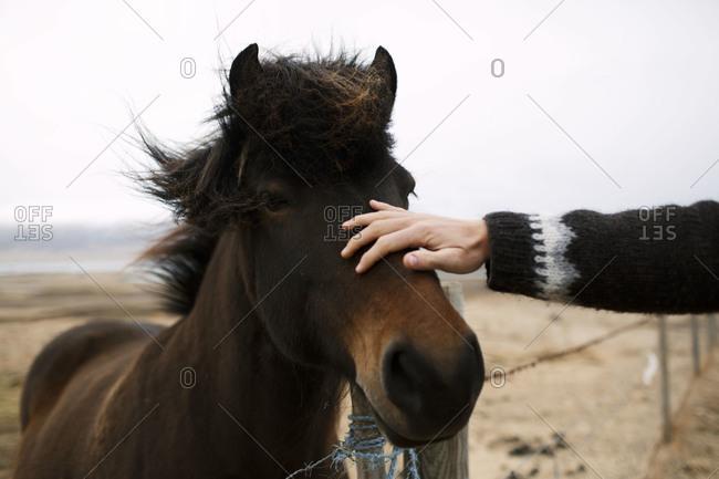 A person pets a horse