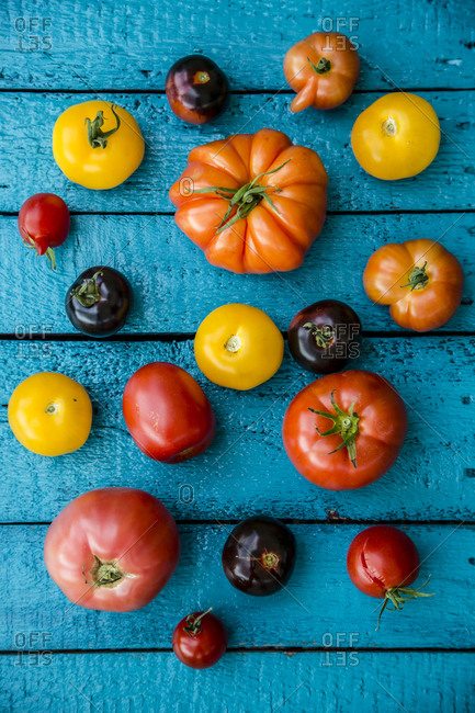 Different heirloom tomatoes on blue wood