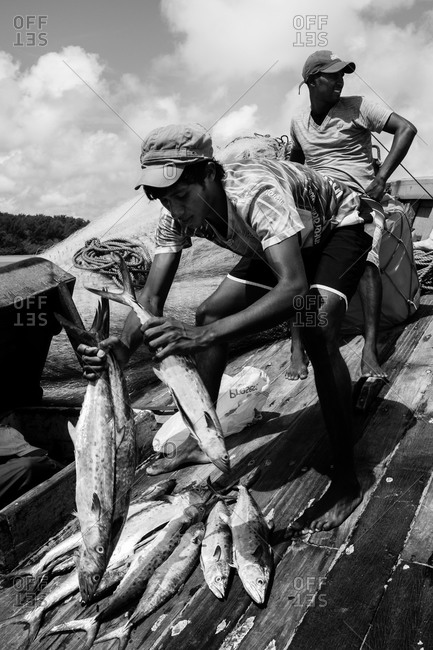 Atins, Maranhao, Brazil - May 6, 2014: Young fisherman picking up fish