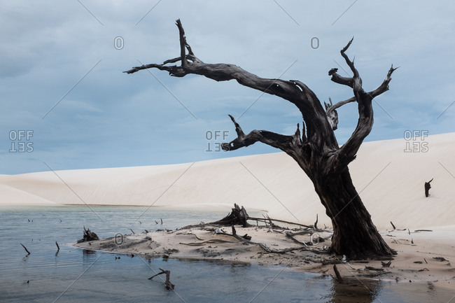 Dead Tree by a lagoon in sand dunes