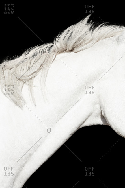 Side view of a horse muscular neck and mane of a horse