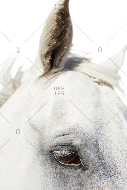 Close up of watchful horse