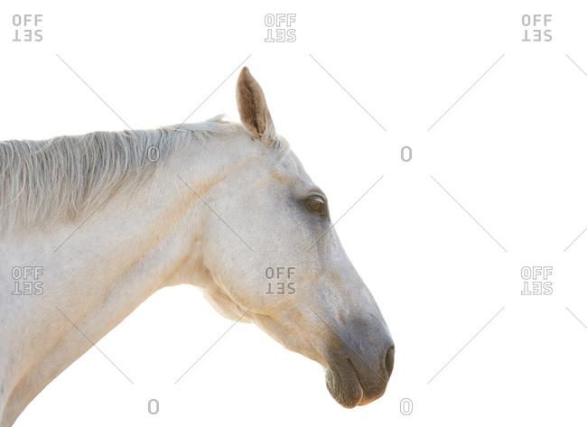 Profile portrait of a horse