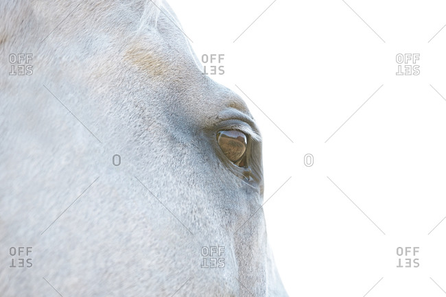 Detail of eye of a horse