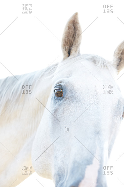 Low angle view of a horse head