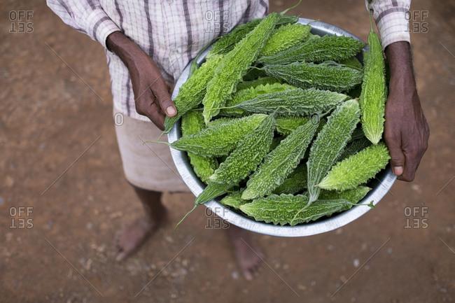 Close up of farmer holding a bowl of karela
