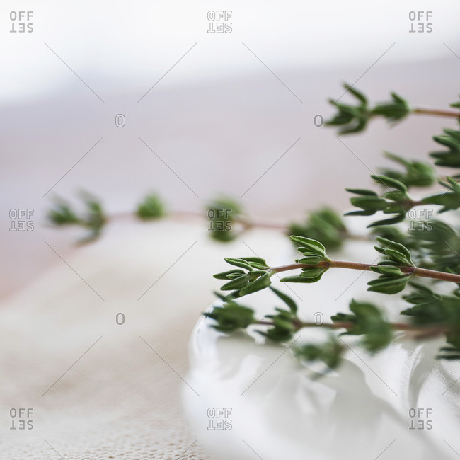 Thyme on a plate