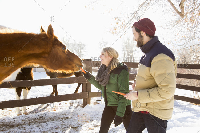Young couple feeding horse with carrots