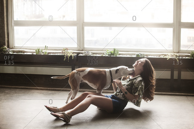 Dog licking his owner in her apartment
